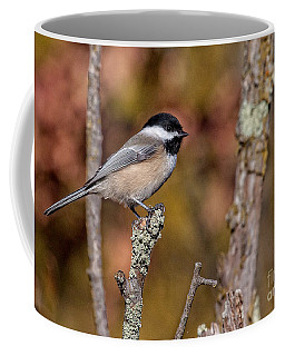 The Perch Coffee Mug