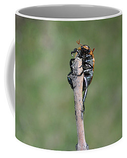 Coffee Mug featuring the photograph The Posing Beetle by Verana Stark
