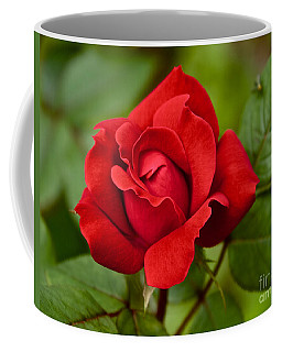 Coffee Mug featuring the photograph The Rose by William Norton