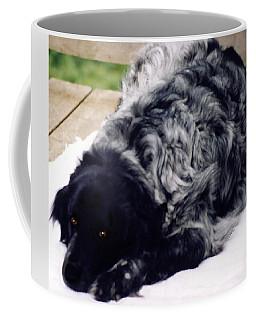 The Shaggy Dog Named Shaddy Coffee Mug