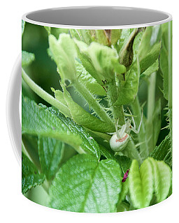 The Shy Goldenrod Crab Spider In The Beach Roses Coffee Mug