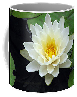 Coffee Mug featuring the photograph The Water Lilies Collection - 02 by Pamela Critchlow