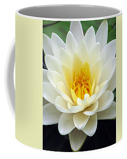 Coffee Mug featuring the photograph The Water Lilies Collection - 03 by Pamela Critchlow
