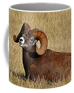 Coffee Mug featuring the photograph This Is My Space by Vivian Christopher