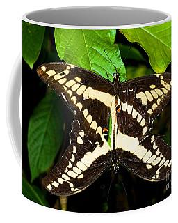Thoas Swallowtail Butterflies Mating Coffee Mug