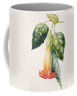 Thorn Apple Flower From Ecuador Datura Rosei Coffee Mug