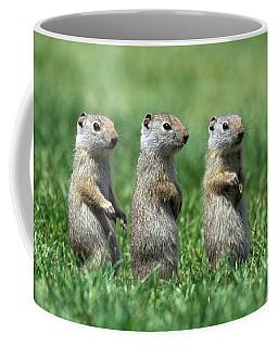 Three Baby Uinta Ground Squirrles Coffee Mug