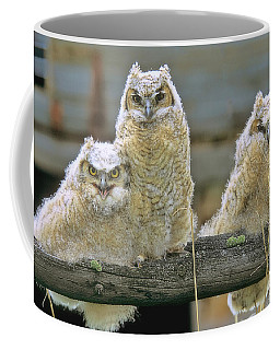 Three Great-horned Owl Chicks Coffee Mug