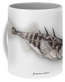Three-spined Stickleback Gasterosteus Aculeatus - Stichling - L'epinoche - Espinoso - Kolmipiikki Coffee Mug