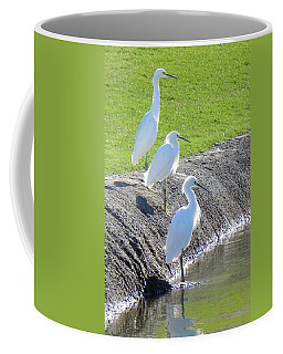 Coffee Mug featuring the photograph Three Stooges by Deb Halloran