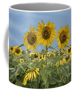 Three Sunflowers At The Front Of A Sunflower Field Coffee Mug