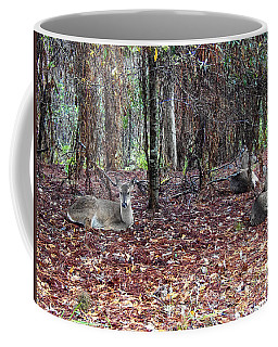 Coffee Mug featuring the photograph Three Whitetail Does 000 by Chris Mercer