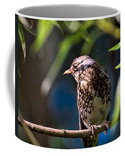 Thrush Coffee Mug