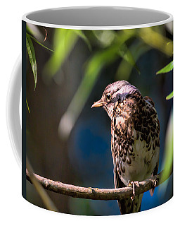 Thrush Coffee Mug by Leif Sohlman