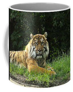Coffee Mug featuring the photograph Tiger At Rest by Lingfai Leung
