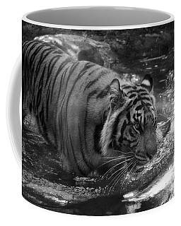 Coffee Mug featuring the photograph Tiger In The Water by Lisa L Silva