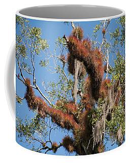 Tikal Furry Tree Closeup Coffee Mug