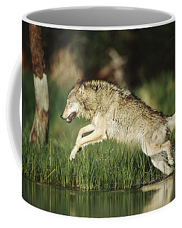 Timber Running Through Water Coffee Mug