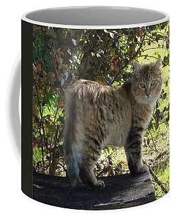 Timber The Kitten Coffee Mug