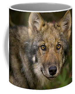 Timber Wolf In Denali Coffee Mug