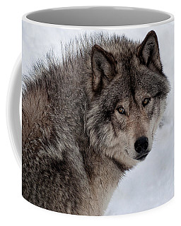 Coffee Mug featuring the photograph Timberwolf At Rest by Bianca Nadeau