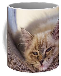 Tired Kitten Coffee Mug