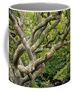 Coffee Mug featuring the photograph Tree #1 by Stuart Litoff