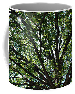 Tree Canopy Sunburst Coffee Mug