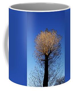 Tree In Afternoon Sunlight Coffee Mug