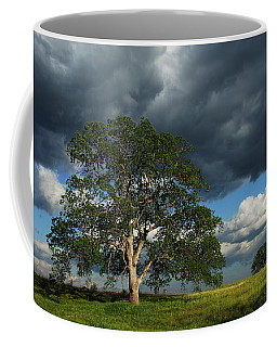 Tree With Storm Clouds Coffee Mug