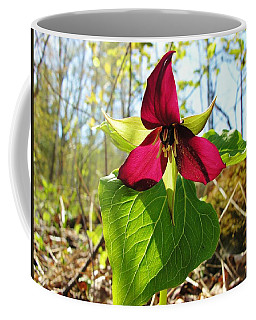 Coffee Mug featuring the photograph Trillium Wild Flower by Sherman Perry