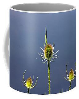 Trio Of Teasels Coffee Mug