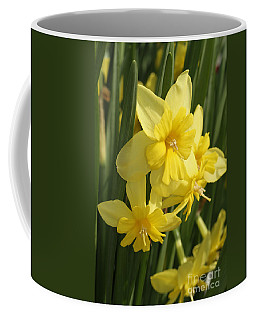Tripartite Daffodil Coffee Mug by Judy Whitton