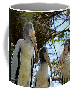 Triplet Wood Stork Nestlings Coffee Mug by Richard Bryce and Family