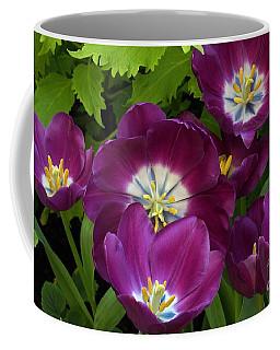 Triumph Tulips Negrita Variety Coffee Mug
