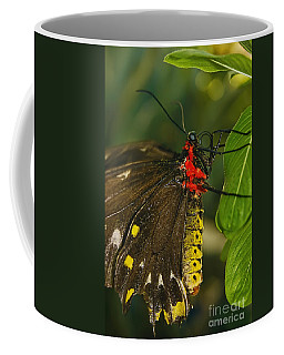 Coffee Mug featuring the photograph Troides Helena Butterfly  by Olga Hamilton