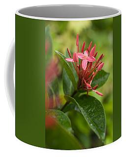 Tropical Flowers In Singapore Coffee Mug