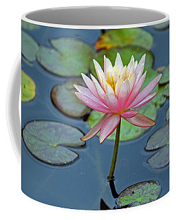 Tropical Pink Lily Coffee Mug