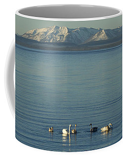 Trumpeter Swans On Yellowstone Lake   #9792 Coffee Mug