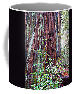 Trunk Of Coastal Redwood In Armstrong Redwoods State Preserve Near Guerneville-ca Coffee Mug by Ruth Hager