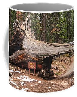 Tunnel Log Coffee Mug by Muhie Kanawati