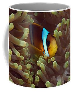 Two-banded Anemonefish Red Sea Egypt Coffee Mug