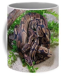Two Burmese Pythons Python Bivittatus Coffee Mug