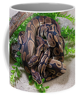 Two Burmese Pythons Python Bivittatus Coffee Mug
