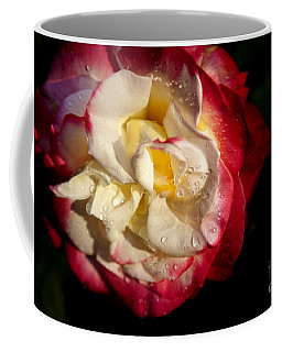 Coffee Mug featuring the photograph Two Color Rose by David Millenheft