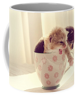 Two Cute Kittens In A Cup Coffee Mug