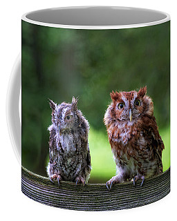 Two Screech Owls Coffee Mug