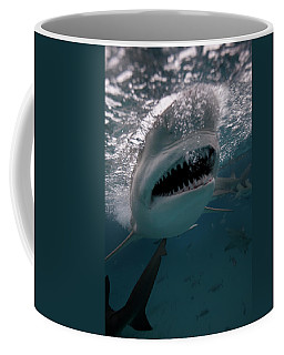 Underwater Shot Of A  Shark With Sharp Coffee Mug