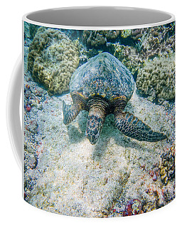 Swimming Turtle Coffee Mug by Denise Bird
