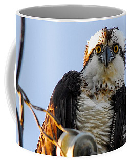 Urban Osprey Coffee Mug by Quinn Sedam